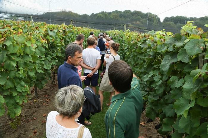 Journées du patrimoine 2019 - Coteau du Braden : De La Vigne Au Vin