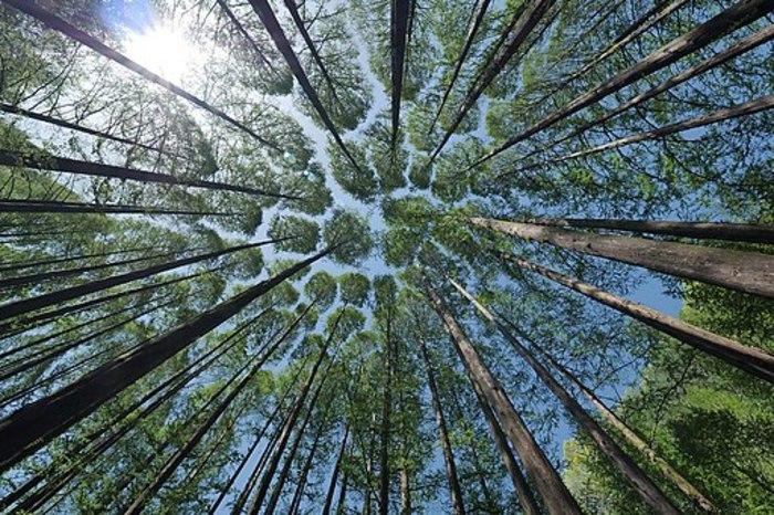 Chercheurs des cimes en canopée