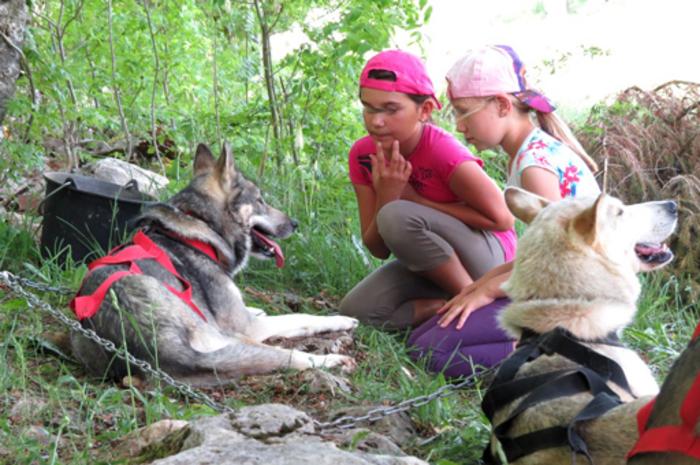 Pour une semaine de complicité avec les chiens et la nature !