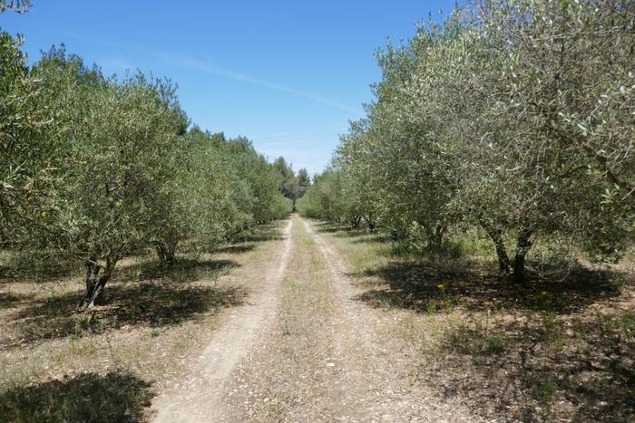 Journées du patrimoine 2019 - Olive, huile d'olive et histoire familiale