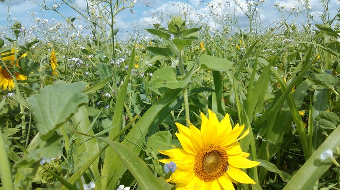 Journées du patrimoine 2019 - Patrimoine Sol Agriculture et Biodiversité !