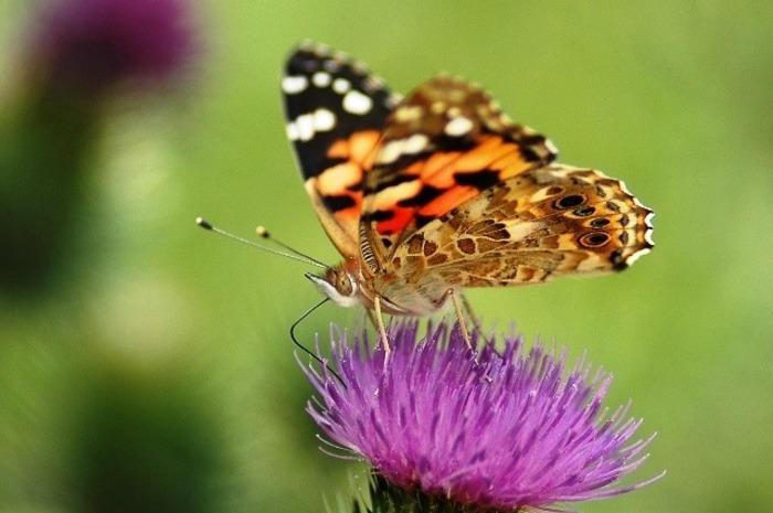 Fait la bi-zzz aux papillons !