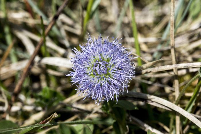Journées du patrimoine 2019 - La nature, regard de naturaliste
