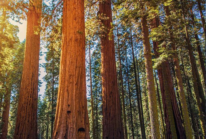 Des arbres et des hommes - Exposition