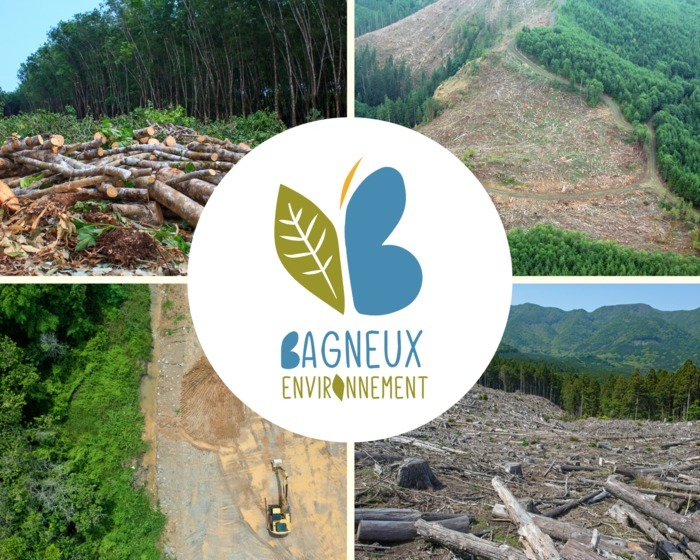 Les P'tits Ateliers Nature : La déforestation