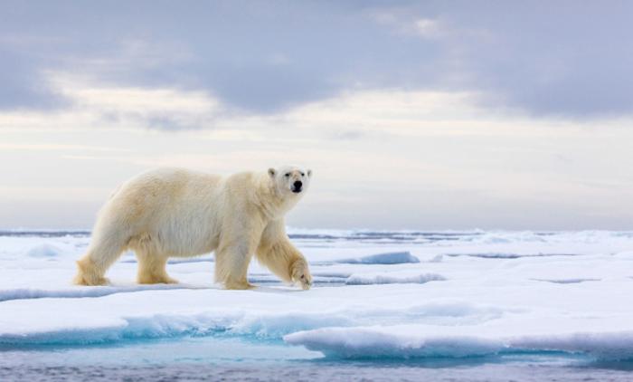 Une exposition regroupant les travaux de photographes et scientifiques autour des effets climatiques sur nos écosystèmes.