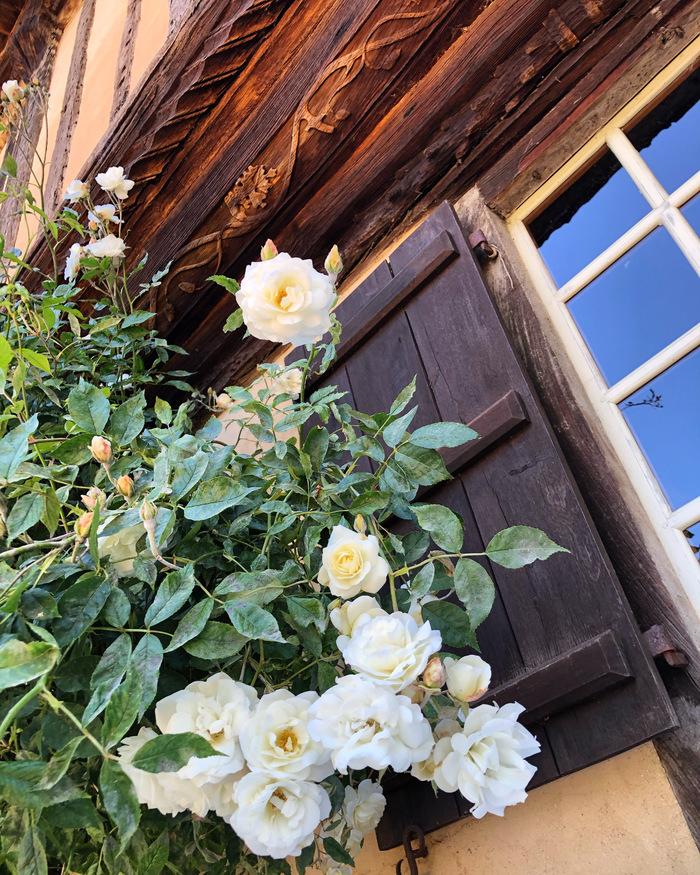 Journées du patrimoine 2020 - Prieuré de Saint-Arnoult témoin de l'attachement au bois et à la terre des maîtres d'oeuvre du Moyen âge