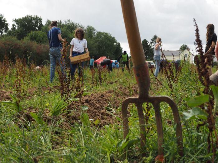 [Annulé] Chantier solidaire de plantation des patates