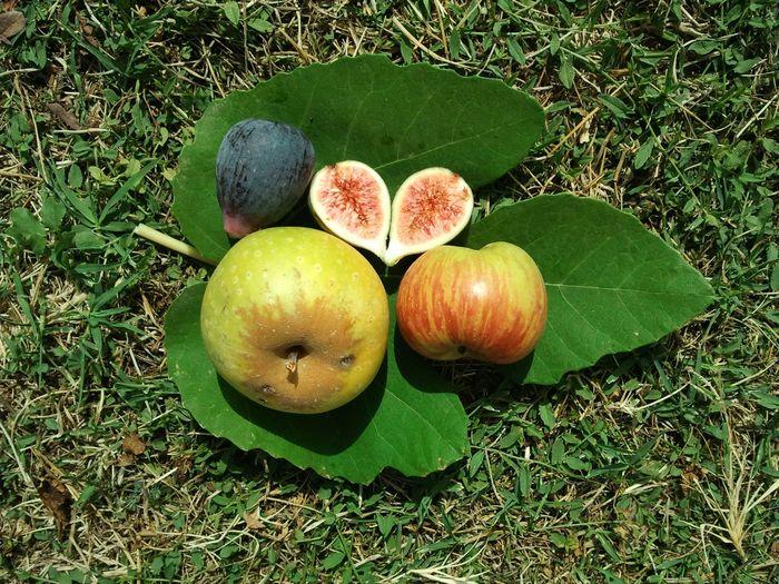 Journées du patrimoine 2020 - Visite des vergers conservatoires et dégustation de pommes et de figues