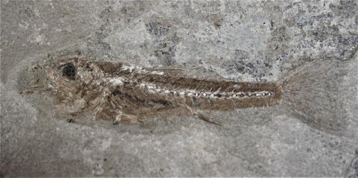 Journées du patrimoine 2020 - exposition fossiles