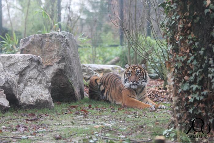 Journées du patrimoine 2020 - Week-end conservation Zoo Amiens Métropole