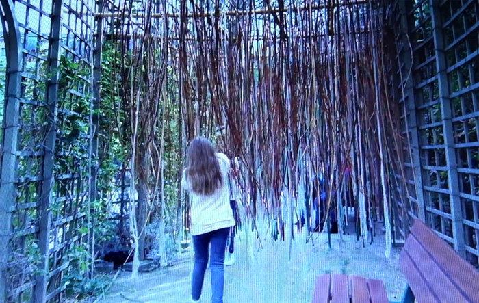 Exposition l'arbre à frôler