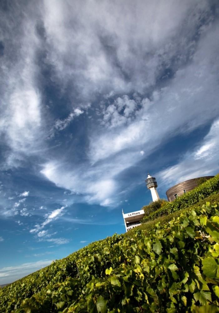 Journées du patrimoine 2020 - Visite du Musée de la Vigne