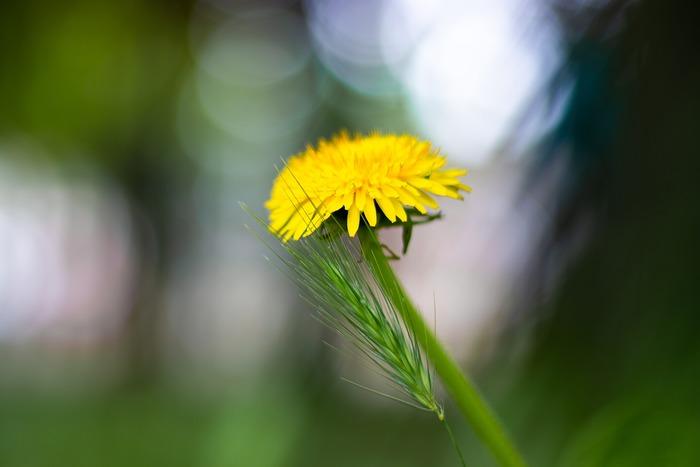 Bacalan, entre flore et patrimoine avec Achillée & Ciboulette