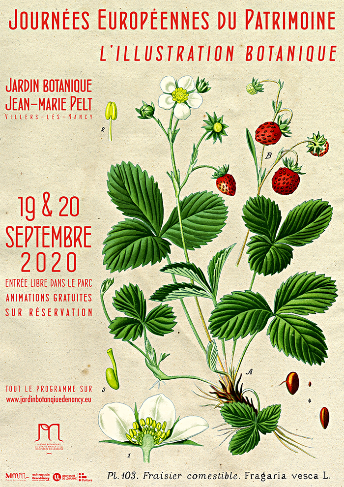 Journées du patrimoine 2020 - Ateliers autour de l'illustration botanique