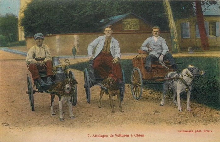 Journées du patrimoine 2019 - Les attelages de chiens dans le Loiret