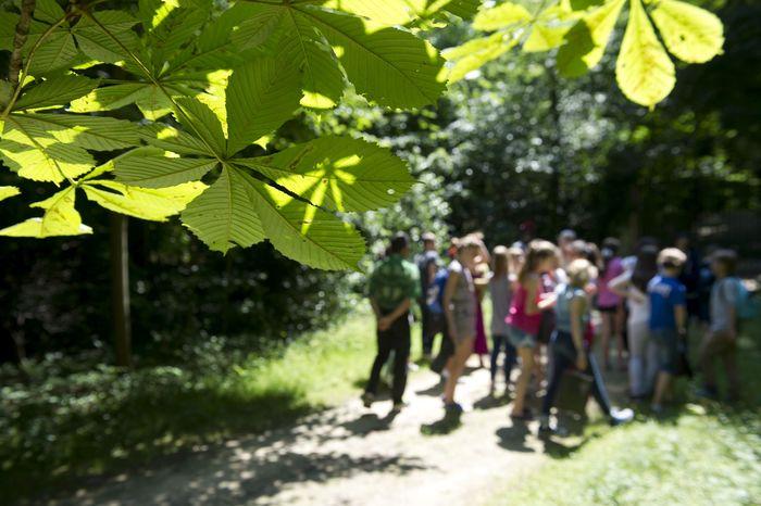 Journées du patrimoine 2020 - Visite guidée de l'Arboretum de la Vallée-aux-Loups