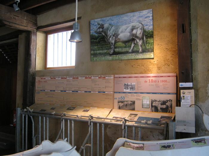 Journées du patrimoine 2019 - Visite commentée du Musée de l'Élevage et du Charolais