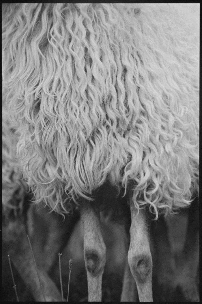 Journées du patrimoine 2020 - Expositions Laine de montagnes/montagne de laines et L'oeil du berger