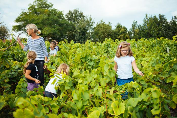 Journées du patrimoine 2019 - Atelier « Vendanges en famille »