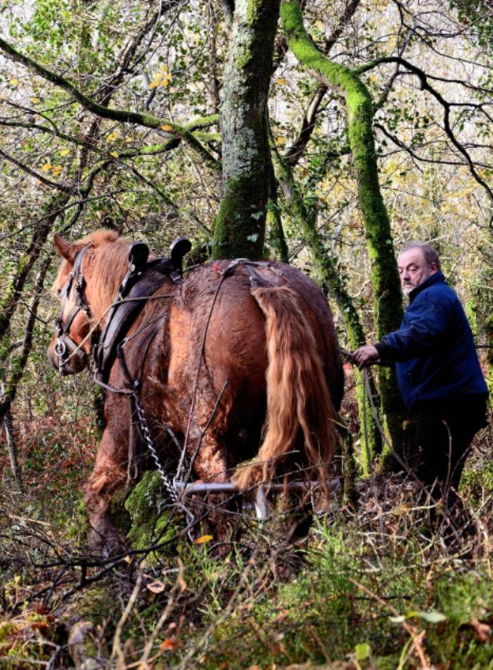 Journées du patrimoine 2020 - Débardage à cheval