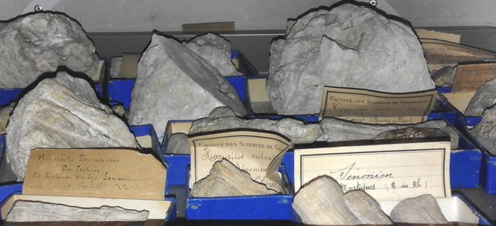 Journées du patrimoine 2019 - Visite guidée de la collection de géologie