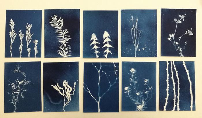 Journées du patrimoine 2020 - Atelier Cyanotype