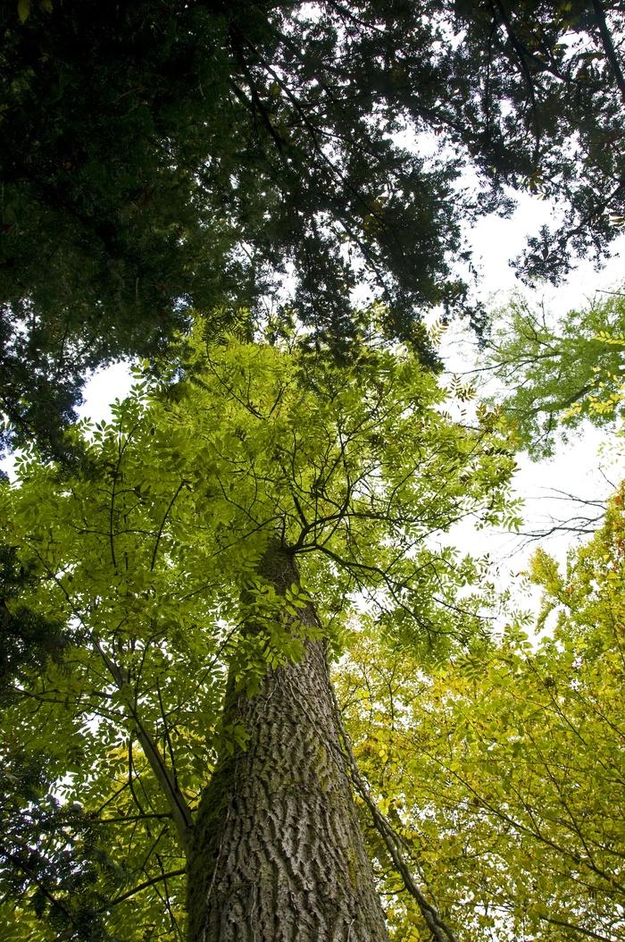 Journées du patrimoine 2020 - Les Arbres Fabuleux — promenade découverte dans le parc du Prieuré