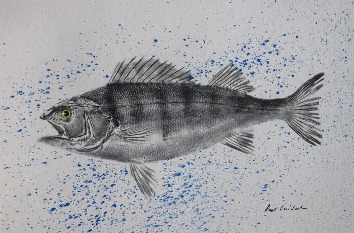 Journées du patrimoine 2019 - Ouverture de l'atelier et présentation des différentes techniques d'empreintes de poisson