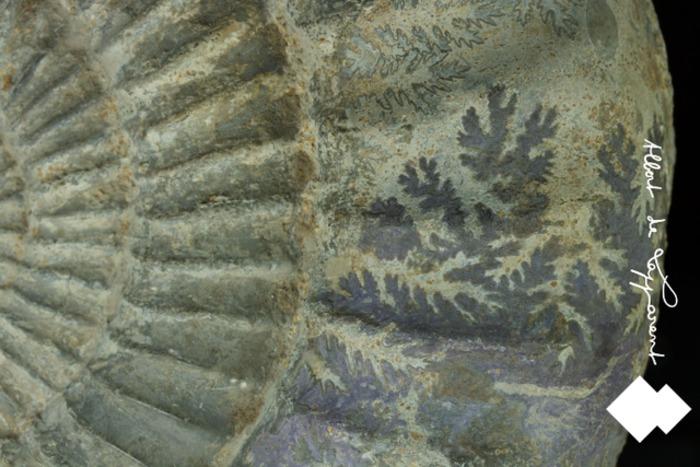 Journées du patrimoine 2020 - Visite virtuelle - Musée Albert de Lapparent
