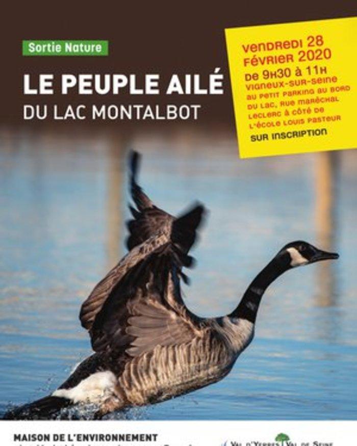 Le peuple ailé du lac Montalbot