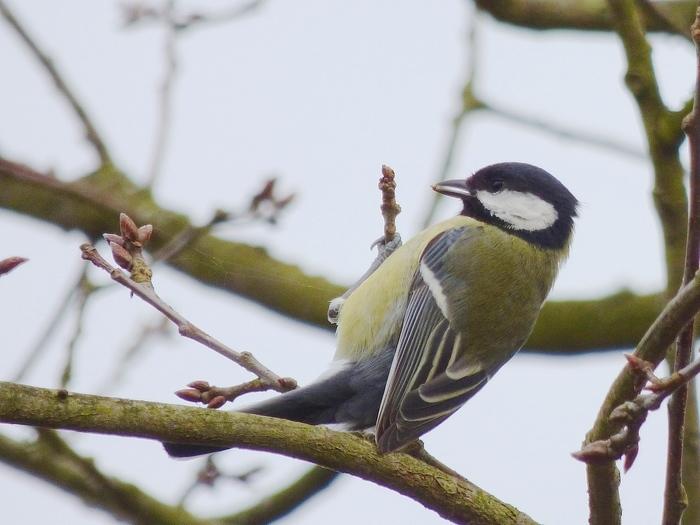 Venez découvrir les oiseaux présents dans le parc des Beaumonts le temps d'une balade