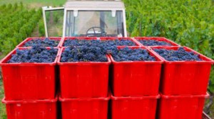 Journées du patrimoine 2019 - À la découverte des vignobles de Châteaugay