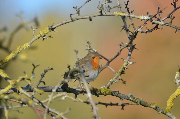 Balade: Deux petites flaques, un oiseau qui boîte