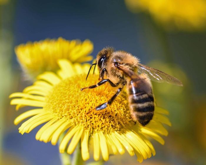 Journées du patrimoine 2020 - Découverte des insectes pollinisateurs - ateliers-conférences