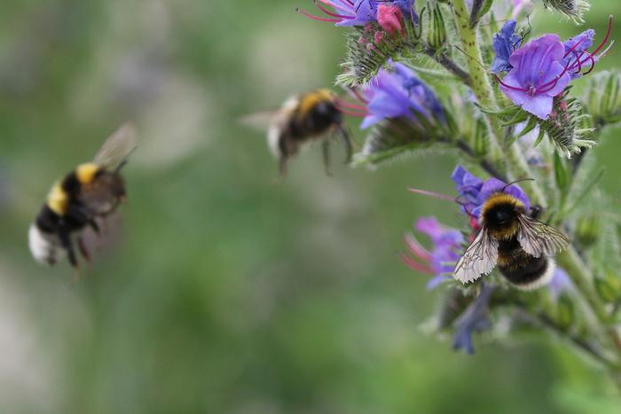 Balade naturaliste : à la découverte des plantes mellifères