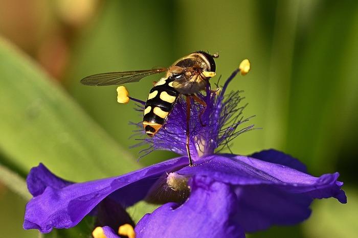 Parmi les pollinisateurs, on connait très bien les abeilles domestiques et pourtant il en existe beaucoup d'autres dans la nature ! Partez à la découverte de ces transporteurs de pollen.