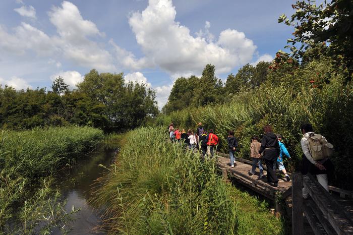Journées du patrimoine 2019 - Visite guidée du Marais Audomarois en bateau et visite libre de la Réserve Naturelle de Clairmarais