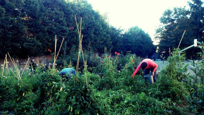 Découvrez une ferme urbaine pédagogique implantée dans un collège du 20ème et échangez avec les membres de l'équipe sur ce beau projet d'agriculture de proximité participative !