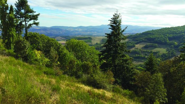 Journées du patrimoine 2020 - Chantier bénévole pour préserver le patrimoine naturel de la Vallée du Bozançon