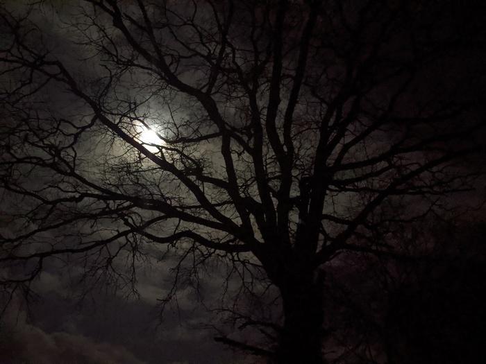 Journées du patrimoine 2020 - Contes et légendes du Manoir et de ses arbres magiques lors d'une visite nocturne aux lampions