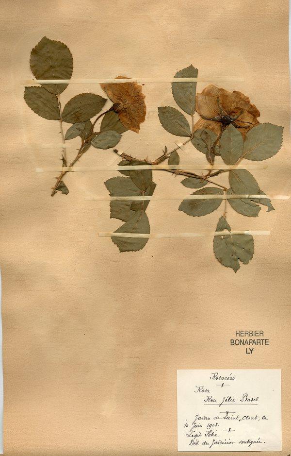 Nuit des musées 2019 -L'histoire des herbiers de l'Université Lyon1