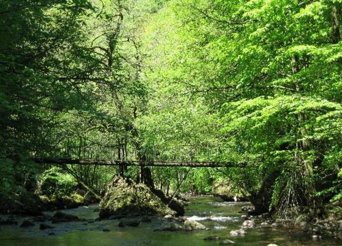 Journées du patrimoine 2020 - Sur les traces de la loutre - Sortie naturaliste