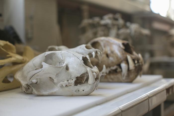 Journées du patrimoine 2020 - Le patrimoine fossile de l'Université de Poitiers