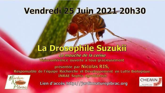 Visioconférence: La Drosophile Suzukii