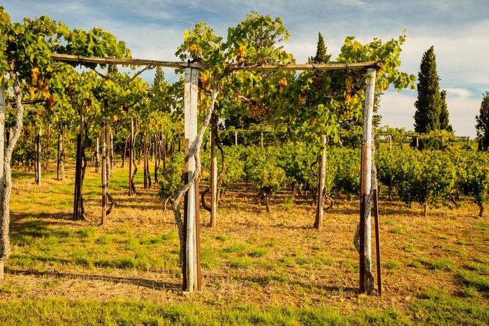 Journées du patrimoine 2019 - Jardin et vignoble romains reconstitués