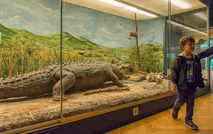 Nuit des musées 2019 -Visite libre du Musée Zoologique