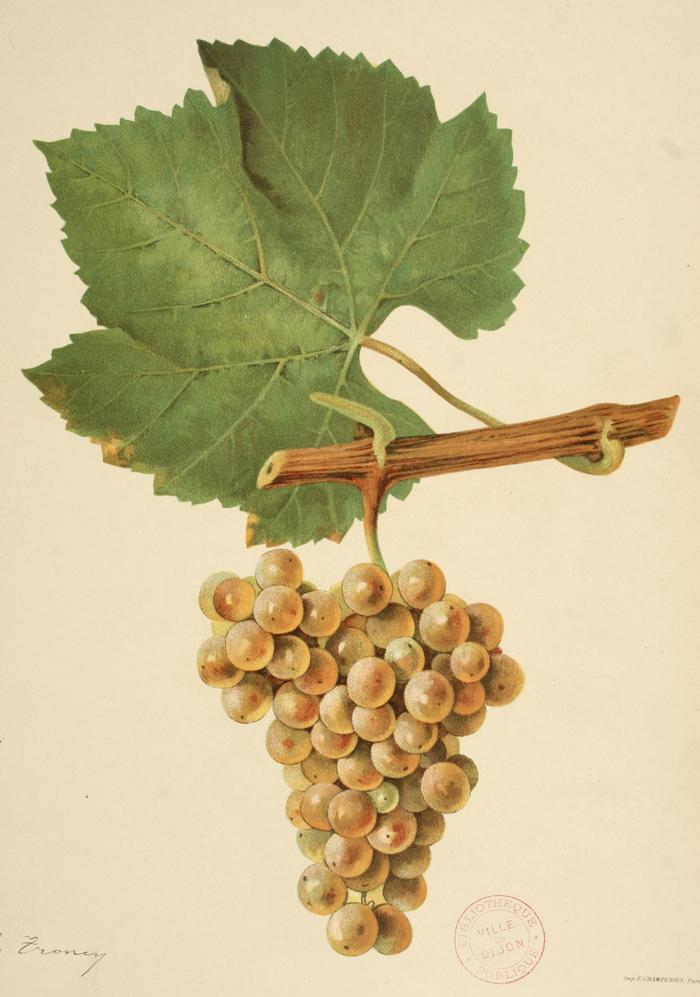 Journées du patrimoine 2019 - Cet été, la bibliothèque s'acclimate. Vignes et vin dans les collections