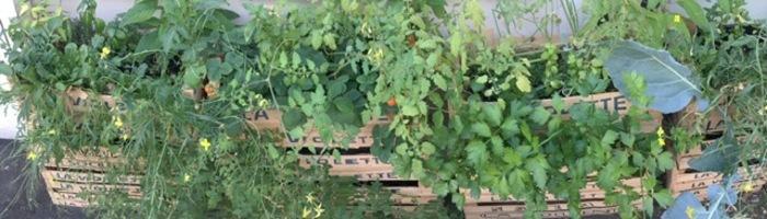 Venez découvrir et créer avec Root Cause les bacs de culture végétalisés et les Crate Garden (cagettes végétalisées à emporter)