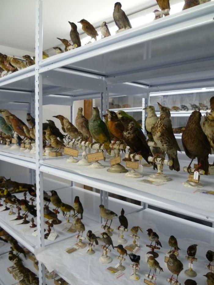 Journées du patrimoine 2020 - Visite des réserves du musée d'Allard